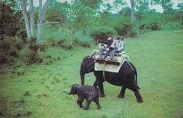 CARTOLINA - POSTCARD - INDIA - TOURISTS TO MUDUMALAI WILD LIFE - India