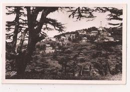CHREA Vue à Travers Les Cedres - Algeria