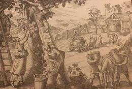 Postal POST CARD Cartolina La Vendemmia Vino Da Xilografia Fine 1600 Perfetta - Vines