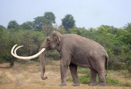 T18-010 ]     Prehistorics Animal Mammoth , China Pre-paid Card, Postal Statioery - Stamps