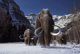 T18-015 ]     Prehistorics Animal Mammoth , China Pre-paid Card, Postal Statioery - Stamps