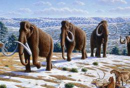 T18-022 ]     Prehistorics Animal Mammoth , China Pre-paid Card, Postal Statioery - Stamps