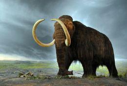 T18-023 ]     Prehistorics Animal Mammoth , China Pre-paid Card, Postal Statioery - Prehistorisch