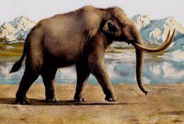 T18-030 ]     Prehistorics Animal Mammoth , China Pre-paid Card, Postal Statioery - Stamps