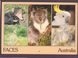 DIEREN  UIT  AUSTRALIE - Animaux & Faune