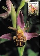 408. BUZIN  OPHRYS ABEILLE - Orchidées