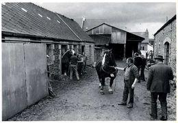 Landivisiau (29) : Chez Les éleveurs De Chevaux Bretons (1983) Par Bernard Cornu - Landivisiau