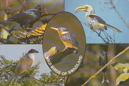 SWAZILAND - Wild Birds In Swaziland - Multiview - Swaziland