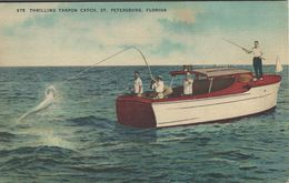 Fishing - Tarpon Catch.  St. Petersburg Florida.s-4220 - Postcards