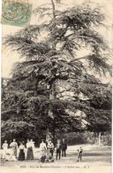 Bois De Meudon Clamart - L'Arbre Vert - Meudon