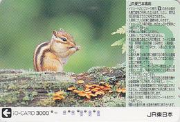 Carte Prépayée Japon - ANIMAL - ECUREUIL & Champignon - SQUIRREL & Mushroom Japan Prepaid IO Card - EICHHÖRNCHEN - 221 - Other