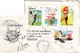 Cuba. Pic à Sourcils Noirs. West Indian Woodpecker . Lettre Pour La France - Climbing Birds