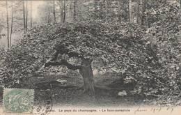 """CPA:PAYS DU CHAMPAGNE ARBRE """"LE FAUX PARAPLUIE"""" VERZY (51) - Trees"""