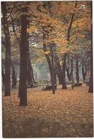 Leningrad: L'Automne Dans Le Jardin D'Eté - Autumn In The Summer Gardens (Jumbo Sized Postcard; 25 Cm X 17 Cm) - Rusland