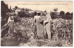 Scène De La Vie Champêtre En Périgord - La Récolte Du Maïs - France