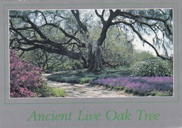 La  LOUISIANE - Ancien Chêne Vivant (Ancient Live Oak Tree) - - Etats-Unis