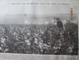 GUERRE 14-18   Vendange En Champagne   Sous Les Obus Allemands   1918 VERZENAY - France