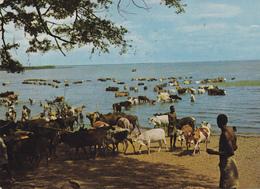 (AFRIQUE) BETAIL - Lac Zwai - Postcards