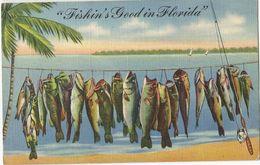 """6Rm-021: """"Fishin's Good In Florida """" - Etats-Unis"""