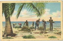 6Rm-022: M-83- Capturning Green Turtles On A Florida Key - Etats-Unis