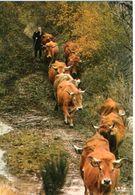 Vaches CPM Ou CPSM - Vaches