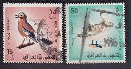 Irak: Garrulus-glandurius 489. Anas Eugustrirostris 493 - Otros