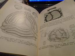 POLLEN AND SPORE MORPHOLOGY PLANT TAXONOMY Gymnospermae Pteridophyta Bryophyta An Introduction To Palynology II ERDTMAN - Sciences Biologiques