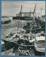 *Photo (1973) : LE CROISIC (Loire-Atlantique) Le Port, Voiliers, Bateaux De Pêche - Vieux Papiers