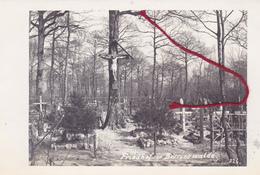 Borrieswalde Friedhof  Cimetière  Carte  Photo Allemande - Sonstige Gemeinden