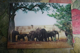 ELEPHANT * ANIMAL * DIMENSION * THREE DIMENSIONAL   - STEREO 3D PC - 1980s - Cartes Stéréoscopiques