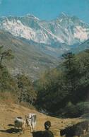 Népal : MT. EVEREST : Nu-tse  ( Carte Timbrée ) - Nepal