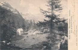T.290.  MACUGNAGA - Monte Rosa - Belvedere - 1905 - Italië