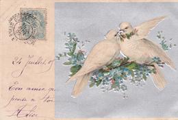 CARTE FANTAISIE. . AMOUR DE PIGEONS SUR MYOSOTIS . ANNEE 1905. CARTE GAUFRÉE FOND ARGENTE - Vogels