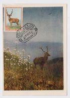 CARTE MAXIMUM CM Card USSR RUSSIA Fauna Animal Deer - 1923-1991 UdSSR