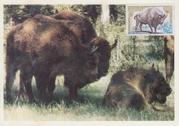 Carte Maximum  1er  Jour   FRANCE   Bison  D' Europe    1974 - Cartes-Maximum