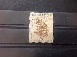 Barbados - Algen (1.75) 2008 - Barbados (1966-...)