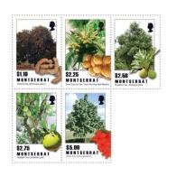 Montserrat 2009 Fruit Tropical Trees I201802 - Montserrat
