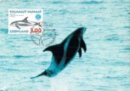 GROENLAND CARTE MAXIMUM  NUM.Yvert 296 MAMMIFERE MARIN - Cartes-Maximum (CM)