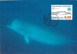 GROENLAND CARTE MAXIMUM  NUM.Yvert 298 MAMMIFERE MARIN - Cartes-Maximum (CM)