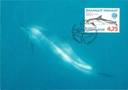 GROENLAND CARTE MAXIMUM  NUM.Yvert 299 MAMMIFERE MARIN - Cartes-Maximum (CM)