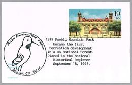ACORN WOODPECKER - Pueblo Mountain Park. Beulah CO 1993 - Climbing Birds
