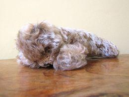 Peluche 141_steiff Ours Couché Floppy Zotty - Steiff Animals