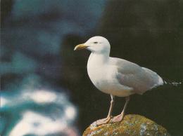 Oiseau - Oiseaux