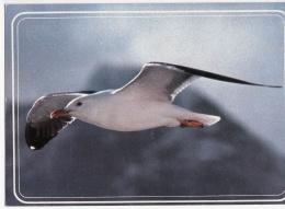 Oiseau - Vögel
