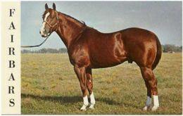 Cheval Fairbars Superbe Carte Postale Great Named Horse Postcard - Pferde