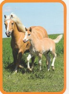 HORSES FROM AROUND THE WORLD / MARE WITH HER FOAL - Pferde