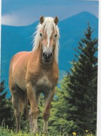 HORSES FROM AROUND THE WORLD / HORSE WITH BEAUTIFUL WHITE MANE - Pferde