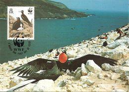 1990 - Ascension Island -   Frigatebird -  Couple Oiseau Fregate - Ascension Island