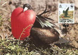1990 - Ascension Island -  Greater  Frigatebird -   Oiseau Fregate Male - Ascension (Ile)