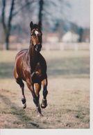 CHEVAL CLIN D'OEIL - Pferde